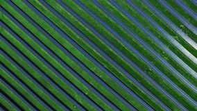 Aerial landscape with solar cells for renewable energy. Ecology power industry. Aerial landscape with solar cells for renewable energy. Aerial view rows of stock footage