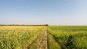 Aerial landscape of various crops slowly advancing above the country road, front view of the field. Recorded in 4k. stock footage