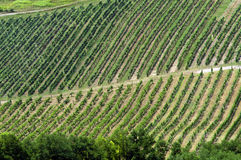 Aerial landscape with vineyards. And road on hillside Stock Image
