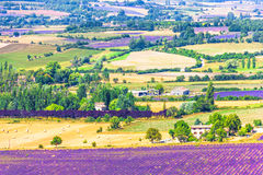 Aerial the lavender fields in Provence Stock Image