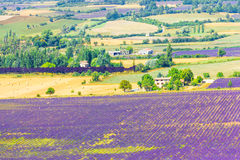 Aerial the lavender fields in Provence Royalty Free Stock Photography