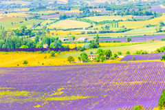 Aerial the lavender fields in Provence Stock Photography