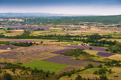 Aerial the lavender fields in Provence Stock Photos
