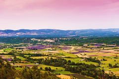 Aerial the lavender fields in Provence Royalty Free Stock Image