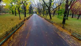 Aerial of Literary Walk in Central Park during autumn stock video footage