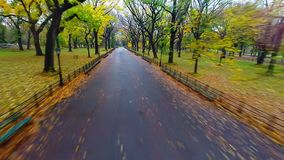 Aerial of Literary Walk in Central Park during autumn stock footage