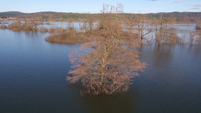 AERIAL: Lone tree in a flooded lake stock footage