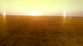 AERIAL long warm evening sunset panorama over wheat rye oats millet agriculture harvest field.