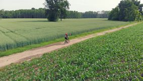 Aerial: man cycling along country road through cultivated fields and farmland, sunny day, eco friendly transportation on cycle lan. E stock footage