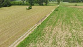 Aerial: man cycling along country road through cultivated fields and farmland, sunny day, eco friendly transportation on cycle lan. E stock video