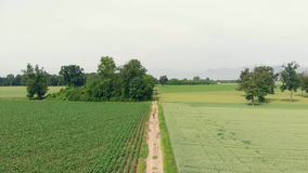 Aerial: man cycling along country road through cultivated fields and farmland, sunny day, eco friendly transportation on cycle lan. E stock video footage