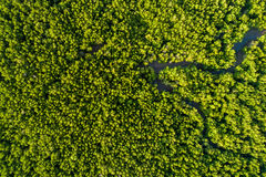 Aerial mangrove forest top view Royalty Free Stock Photo