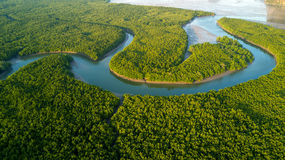 Aerial mangrove forest view Royalty Free Stock Photos