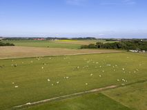 Aerial of meadowland with sheep and cultivated land on the dutch island of Texel. Aerial image made by drone of meadowland with sheep and cultivated land on the stock image