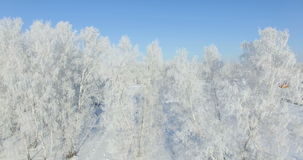 Aerial: morning in a winter forest.. Frozen Birch tree with frost at winter field and blue sky stock footage