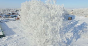 Aerial: morning in a winter forest.. Frozen Birch tree with frost at winter field and blue sky stock video