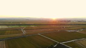 Aerial view Sunset in rice fields in Valencia stock video