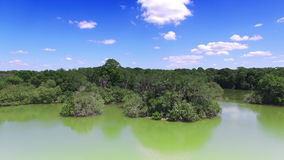 Aerial of nature preserve in Central Florida stock footage