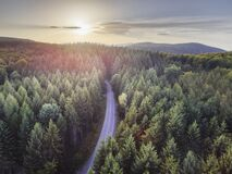 Free Aerial Nature Scenic Landscape Of Pine Trees And Driving Road In Summer. Top View Of Dark Green Forest In Mountain At Sunset Royalty Free Stock Photos - 173342668