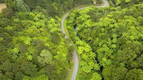 Aerial, New Zealand mountain road through fern forest