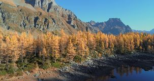 Aerial over alpine mountain valley lake discovering orange larch forest woods valley in sunny autumn.Alps outdoor stock video footage