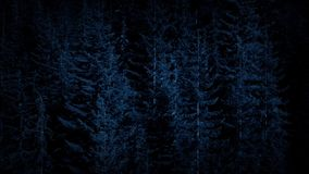 Aerial Over Dense Forest In The Dark. Flying over large forest trees at night stock video footage