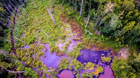 Aerial over pond and forest Stock Images