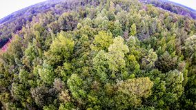 Aerial over thick forest Stock Images