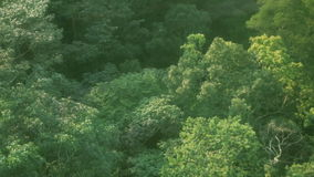 Aerial over tropical jungle stock video footage