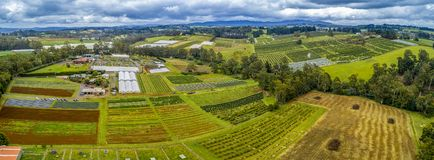 Aerial panorama of cherry farms. Aerial panorama of cherry farms in Melbourne, Australia royalty free stock image