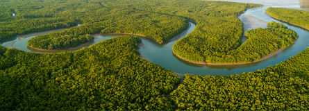 Aerial panoramic mangrove forest view Stock Image