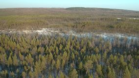 Aerial panoramic top view of winter forest on the north stock footage