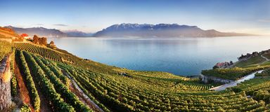 Aerial panoramic view of the city of Vevey at Lake Geneva with vineyards of famous Lavaux wine region on a beautiful sunny day. stock images