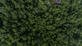 Aerial Para Rubber Tree, Rubber Plantation Stock Photography