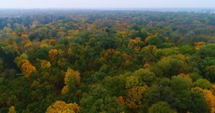 Aerial park forest autumn trail path stock video footage