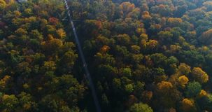 Aerial park forest autumn sun stock video