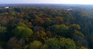 Aerial park forest autumn sun stock video footage