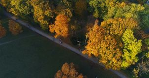 Aerial park forest autumn sun stock footage