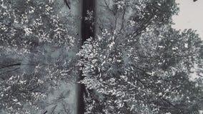 aerial Person geht durch einen schneebedeckten Wald stock video footage