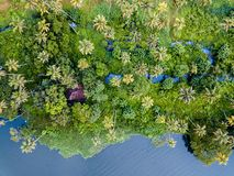 Aerial photo of Alappuzha India. Birds eye view photo of Alappuzha, India Stock Photography