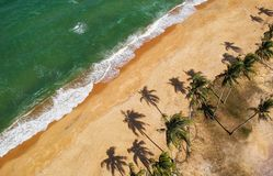 Aerial Photo of Beige With Coconut Trees Royalty Free Stock Images