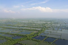 Aerial photo of the flooded rice plantation Stock Photography