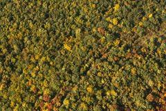 Aerial photo of a forest Royalty Free Stock Photography