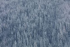 Aerial photo of glacier valley and snow covered forest. Forest f. Aerial photo of glacier valley. Winter background with snow covered trees. First snow covered royalty free stock photo