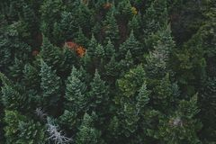 Aerial Photo of Green Pine Tree Royalty Free Stock Images