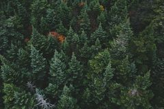 Aerial Photo of Green Pine Tree Royalty Free Stock Photo