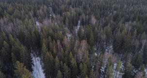 Aerial photo over fir forest in winter season Stock Image