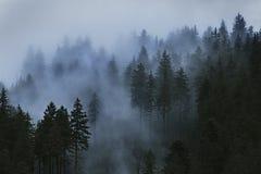 Aerial Photo of Pine Trees Stock Photo