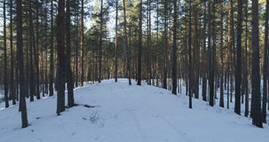 Aerial photo of sunset in winter pine forest. 4k drone photo Royalty Free Stock Photos