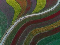The aerial photo of tulip flowers and multicolored melody royalty free illustration